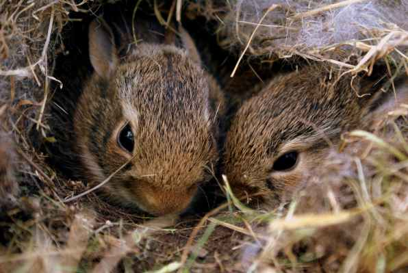 Photo by Jim Long on Pexels.com
